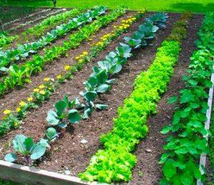 Déplacement pour jardinage 🥦🌶🥕🍓